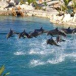 golfinhos apresentando