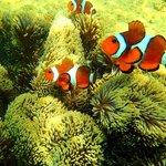 Nemo, snorkeling