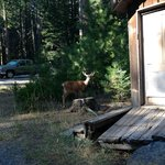 Deer wander through the property