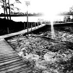 Back yard boardwalk