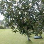 Tree outside Room V
