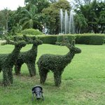 Topiary in the gardens