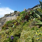 Beautiful gardens at the Minack