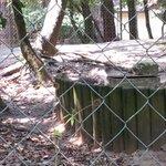 Zoo La Palmyre