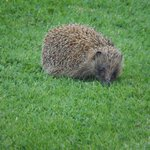 A very prickly guest!