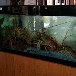 Da Francesco al Pirata si mangia  ottimo pesce freschissimo e prezzo ottimo. Locale molto bello