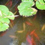 Искусственный пруд с рыбой