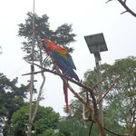 Macaw at the lodge.