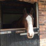 The stables next door
