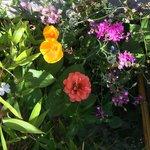Garden beside the parking lot