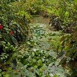 Caiman Lagoon