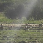 Deer running around the property each evening.