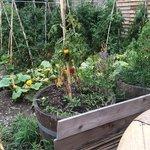 Les légumes servis à table proviennent pour certains du jardin à l'arrière du restaurant.