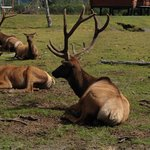 Stop at the Alaska Wildlife Conservation Center on your way to or from Anchorage