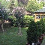 A part of the garden