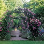Lovely rose bower walk in the gardens