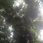 Tree in reserve
