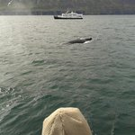close to whale watching