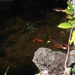 fishes near pool bar