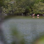 Flamingoes in the salt pond