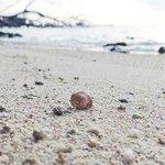 Photo de Pelangi Island Resort
