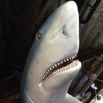 Gotta love the shark.