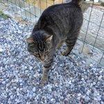 Cute kitty on the terrace
