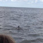 One of the many dolphin sitings (I only wish I'd brought my better camera!)