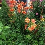 Wicked Oyster--beautiful garden