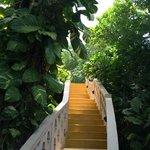 lush walkways