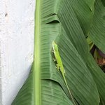 little lizard in the backyard