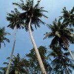 paradise island ;-)