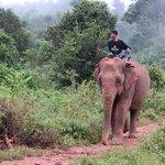Elephant sanctury