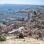 view of Alicante, seagull was there by accident
