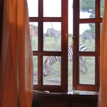 Zebras outside the bathroom!