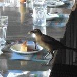 デザートを食べる小鳥