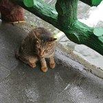 ガイドの猫ちゃん