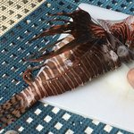 Lionfish - beautiful but bad