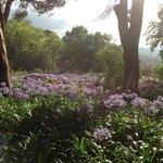 Foto que tirei de um dos Jardins do Alma Sintra Hostel