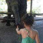 my daughter loved feeding the elephants every day