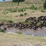 CRUCE DE ÑUS DE KENIA A TANZANIA