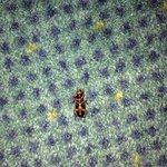 Una cucaracha que encontramos en la cortina de la suite