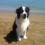 Dank dem Hundestrand darf unser Hund mit den Tag genießen