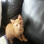 Arnie their cute kitten!