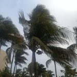 Aruba breezes