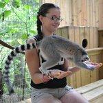 Bella the Lemur