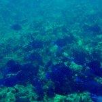 Snorkeling at Cades Reef