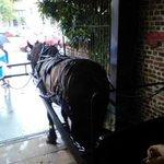 Ralph the horse