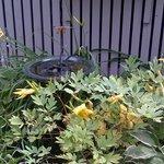 Foto de Dragonfly Guest House