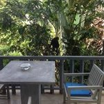 Monkey Visitor! Right outside our room!